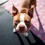 112 Noms des chiens mâles et leur signification
