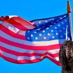 Races de chiens américains