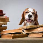 Animaux domestiques dans le code civil