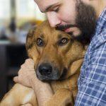 Principales causes de cancer chez le chien