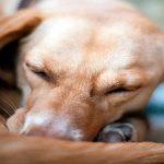 Maladies de la peau chez le chien