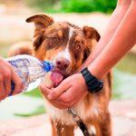 Comment savoir si un chien est déshydraté? Signes de déshydratation