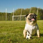 Animaux et sport, aspects légaux