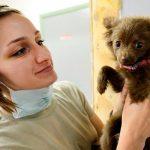 Types de séborrhée canine, symptômes et traitement