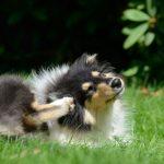 Pourquoi mon chien se gratte-t-il? 3 raisons scientifiques