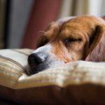 5 signes qui indiquent qu'un chien est sur le point de mourir