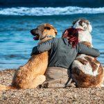 Comment faire vivre mon chien plus longtemps? C'est aussi simple que ça