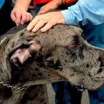 Différences entre le chenil et la garde des animaux