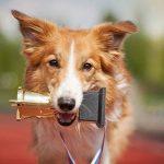 Quels sont les chiens les plus talentueux au monde