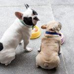 Conseils pour changer le régime du chien