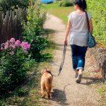 Comment promener un chien correctement? Trucs et astuces