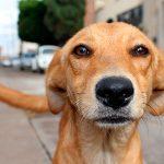 11 avantages de l'adoption d'un chien adulte Découvrez-les!