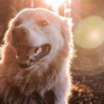 Que ne pas faire par temps chaud avec nos chiens?
