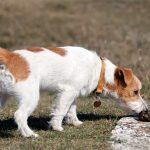 Comment empêcher un chien de manger des excréments