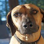 Mon chien a des selles de mucus. Quel est le problème?