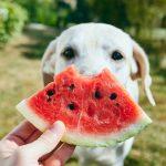 Quel genre de fruits les chiens peuvent-ils manger?