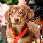 Comment apprendre à un chien à marcher
