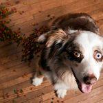 Comment conserver la nourriture pour chien
