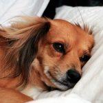 Symptômes d'un chien malade