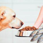 Quelle est la meilleure nourriture pour poissons pour chiens?