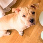 Comment identifier et gérer l'anxiété chez les chiens