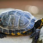 100 noms de tortues
